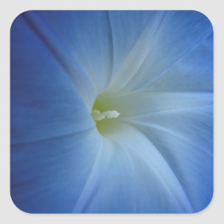 Heavenly Blue Morning Glory Close-Up Square Sticker