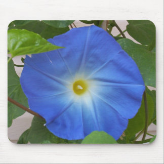 Heavenly Blue Morning Glory Flower in Bloom Mouse Pad