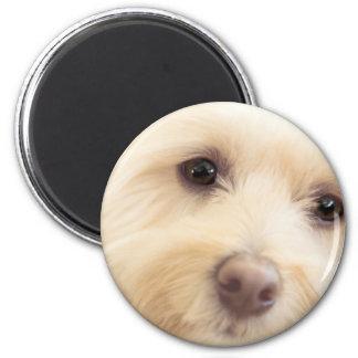 Heavenly Pup Magnet