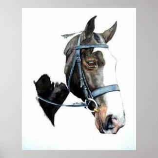 Heavy Hunter Horse Portrait Poster Print
