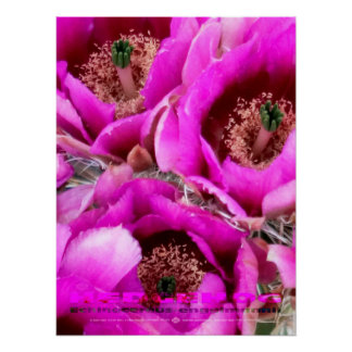 Hedgehog Blossoms, Sonoran Desert Poster