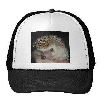 Hedgehog Hat