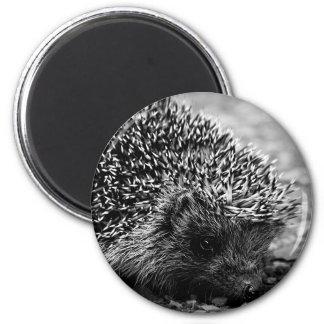 hedgehog 6 cm round magnet