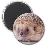 Hedgehog, Magnets Pour Réfrigérateur