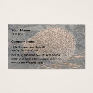 Hedgehog On Tiny Black Rocks Business Card