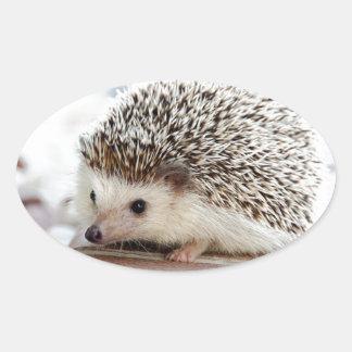 Hedgehog Oval Sticker
