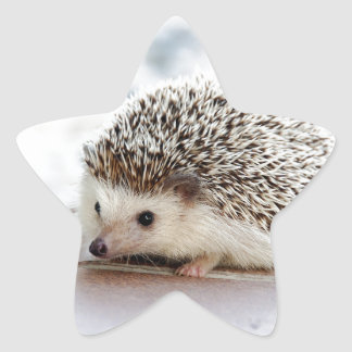 Hedgehog Star Sticker