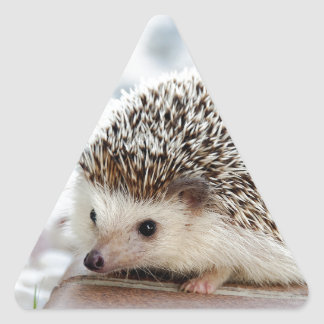 Hedgehog Triangle Sticker