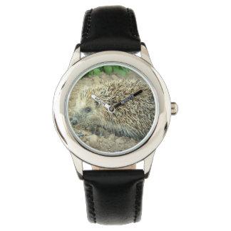 Hedgehog Watch