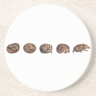 Hedgehogs in a line coaster