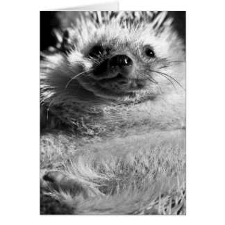 Hedgie Card