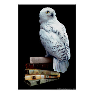 Hedwig on books poster