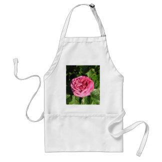 Heirloom Hybrid Tea Rose 027 Aprons
