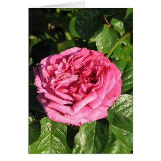 Heirloom Hybrid Tea Rose 027 Greeting Card