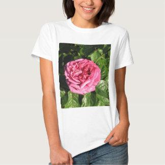Heirloom Hybrid Tea Rose 027 T-shirts