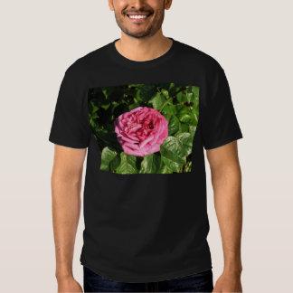 Heirloom Hybrid Tea Rose 027 Tees