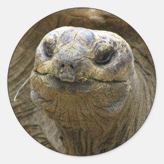 Helaine's Aldabra Tortoise Classic Round Sticker