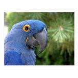 Helaine's Blue Parrot Postcards