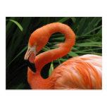 Helaine's Flamingo Postcards