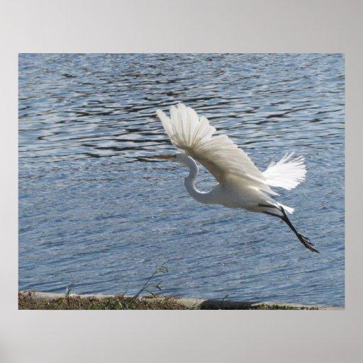Helaine's Flying Egret Poster