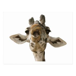 Helaine's Goofy Giraffe Postcard