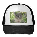 Helaine's Koala Bear Mesh Hat