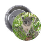 Helaine's Koala Bear Pinback Buttons
