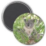 Helaine's Koala Bear Refrigerator Magnet