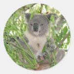 Helaine's Koala Bear Round Stickers