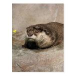 Helaine's Otter Postcard