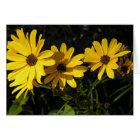 Helianthus salicifolius (Willow-leaved sunflower) Card