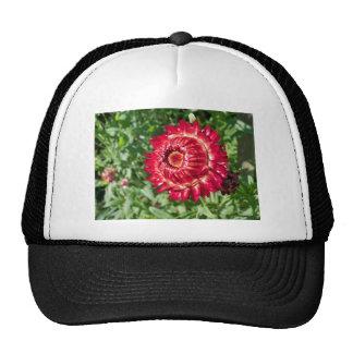 Helichrysum flower trucker hats