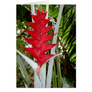 Heliconia and Palm Card