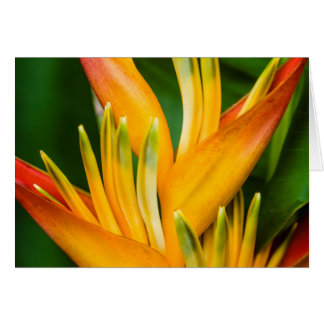 Heliconia Bird of Paradise Flower Photography Card