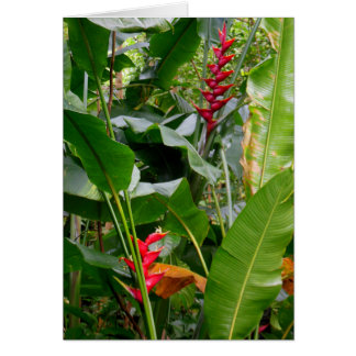 Heliconia Card