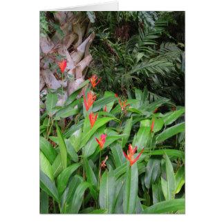 Heliconia Garden Card