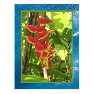 Heliconia rostrata postcard