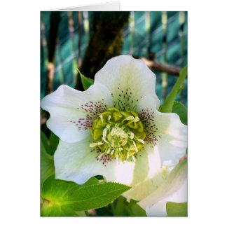 Hellebore Flower Bloom Notecard