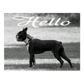 Hello Boston Terrier Puppy Dog Greeting Post Card