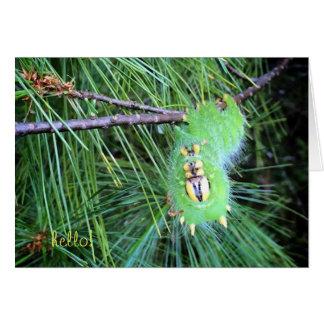 hello caterpillar notecard