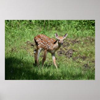 Hello Deer Poster Print
