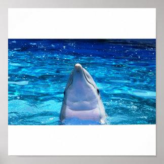 Hello Dolphin Print