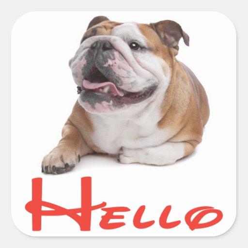 Hello English Bulldog Puppy Dog Sticker / Label