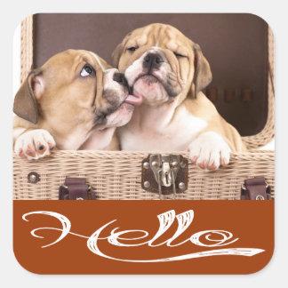 Hello English Bulldog Puppy Dog Sticker / Seal Square Sticker