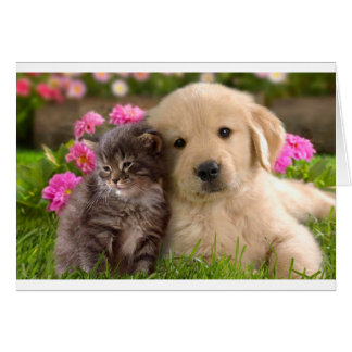 Hello Friend Golden Retriever Puppy Kitten Card