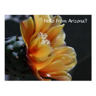 Hello From Arizona!! Postcard