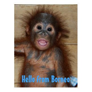 Hello from Borneo Orangutan Orphan Rescue Postcard