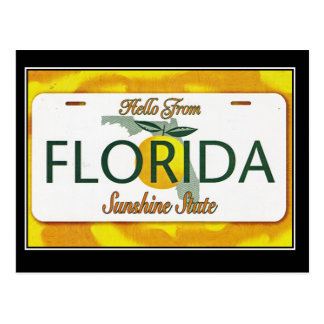 Hello From Florida Vintage Travel Postcard
