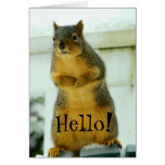 Hello from Squirrel Note Card