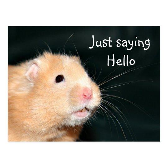 Hello hamster postcard